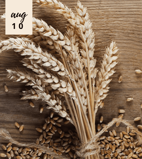 5 BEAUTY FACTS ABOUT WHEAT GERM OIL AND WHY IS IT A POPULAR SKINCARE INGREDIENT