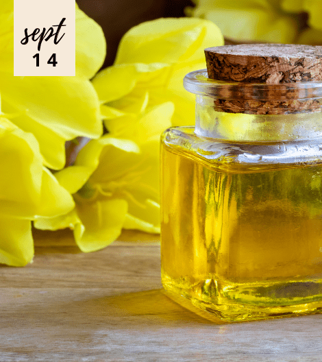 5 BEAUTY AND HEALTH BENEFITS OF EVENING PRIMROSE OIL YOU ALL SHOULD CHECK OUT!