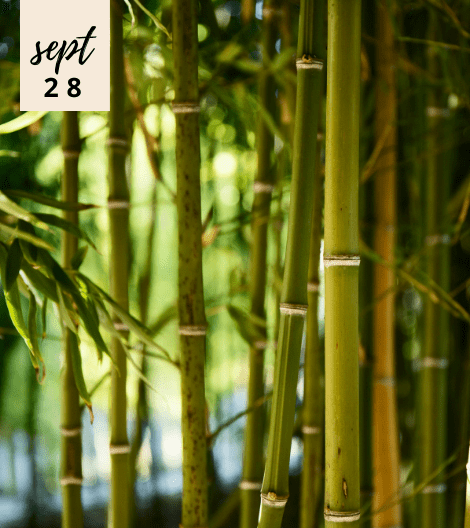 5 THINGS YOU NEED TO KNOW ABOUT BAMBOO EXTRACT FOR YOUR BEAUTY AND WELL-BEING CONCERN